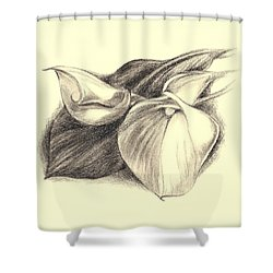 Shower Curtain featuring the drawing Calla Lilies by MM Anderson