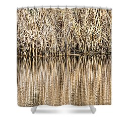 Golden Reed Reflection Shower Curtain by Bill Kesler
