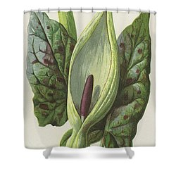 Arum, Cuckoo Pint Shower Curtain by Frederick Edward Hulme
