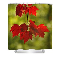 Shower Curtain featuring the photograph As Red As They Can Be by Aimelle