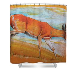As Summer Ends Shower Curtain