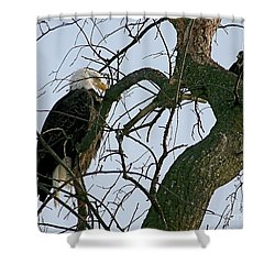 As The Eagle Looks On Shower Curtain by Sue Stefanowicz