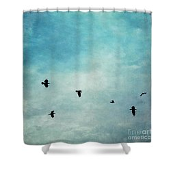 As The Ravens Fly Shower Curtain