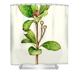 Shower Curtain featuring the painting As The Twig Is Bent The Tree Inclines. by Heidi Kriel