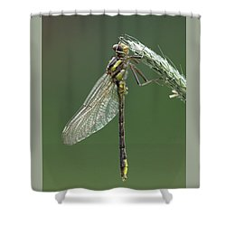 Ashy Or Dusky Clubtail Shower Curtain