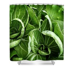 Asian Cabbage Aka Bok Choi Shower Curtain by Dee Flouton