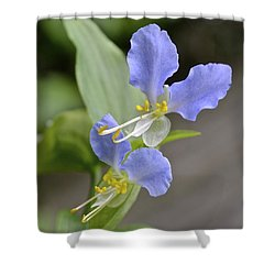 Virginia Dayflower Pair Shower Curtain