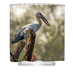 Asian Openbill Shower Curtain by Pravine Chester