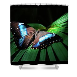 Shower Curtain featuring the photograph Asleep Beneath The Moon by Karen Wiles