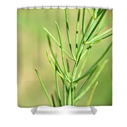 Asparagus Frond Macro Shower Curtain by Robyn Stacey