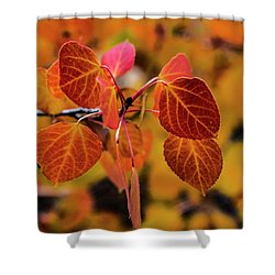 Aspen Aflame Shower Curtain