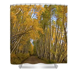 Shower Curtain featuring the photograph Aspen Alley by Steve Stuller