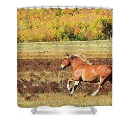 Aspen And Horsepower Shower Curtain