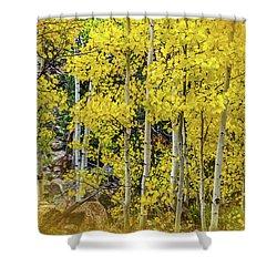 Shower Curtain featuring the photograph Aspen Autumn Burst by Bill Gallagher