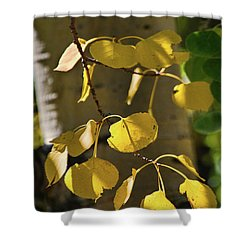 Aspen Closeup Shower Curtain