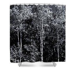 Aspen Drama Shower Curtain