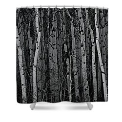Aspen Forest Shower Curtain by Brad Allen Fine Art