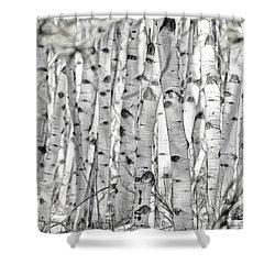 Aspen Forest Iv Shower Curtain