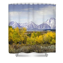 Aspen Gold In The Tetons Shower Curtain