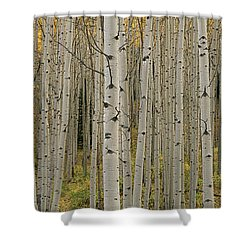 Aspen Grove In Fall, Kebler Pass Shower Curtain by Ron Watts