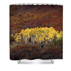 Aspen Grove Shower Curtain by Rich Franco