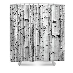 Shower Curtain featuring the photograph Aspen Grove by Stephen Holst