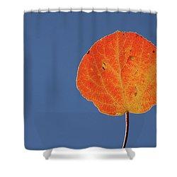 Aspen Leaf 1 Shower Curtain