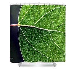 Aspen Leaf Veins Shower Curtain