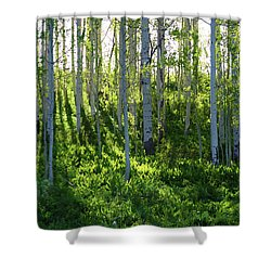 Aspen Morning 1 Shower Curtain by Marie Leslie