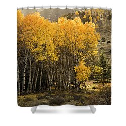 Aspen Stand Shower Curtain by Aaron Spong