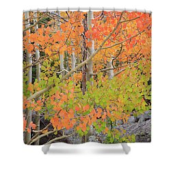 Aspen Stoplight Shower Curtain