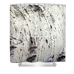 Shower Curtain featuring the photograph Aspen Tree Bark by Christina Rollo