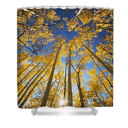Aspen Tree Canopy 3 Shower Curtain by Ron Dahlquist - Printscapes