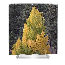 Aspen Tree Fall Colors Co Shower Curtain