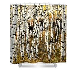 Aspen Tree Grove Shower Curtain