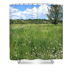 Aspen Tree In Meadow With Wild Flowers Shower Curtain