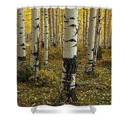 Aspens - 0245 Shower Curtain