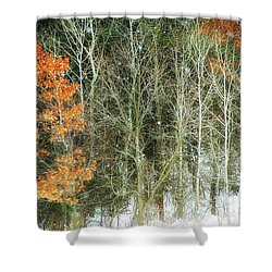 Aspens And Color Shower Curtain