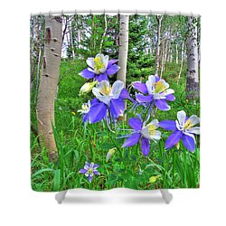 Aspens And Columbines Shower Curtain