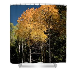 Shower Curtain featuring the photograph Aspens And Sky by Steve Stuller