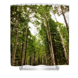 Shower Curtain featuring the photograph Aspens Galore by Rick Furmanek
