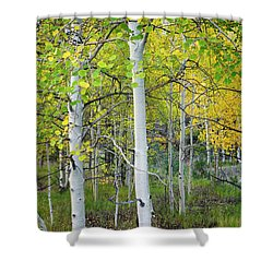 Aspens In Autumn 6 - Santa Fe National Forest New Mexico Shower Curtain