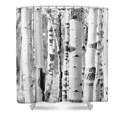 Shower Curtain featuring the photograph Aspens In Black And White  by Saija Lehtonen