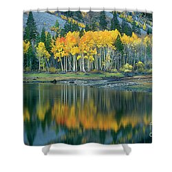 Aspens In Fall Color Along Lundy Lake Eastern Sierras California Shower Curtain by Dave Welling