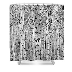 Aspens In High Key Shower Curtain by John De Bord