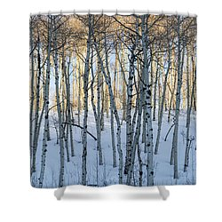 Aspens In Shadow And Light Shower Curtain
