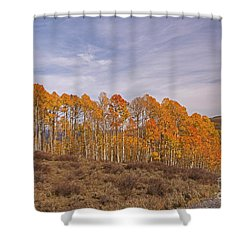 Aspens In Utah Shower Curtain