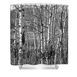 Aspens Shower Curtain by Kathy Russell