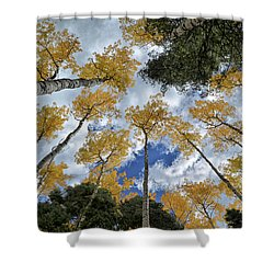 Aspens Reaching Shower Curtain
