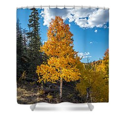 Aspen Tree In Fall Colors San Juan Mountains, Colorado. Shower Curtain